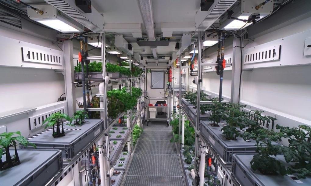 В Антарктике впервые вырастили свежие овощи (2 фото)