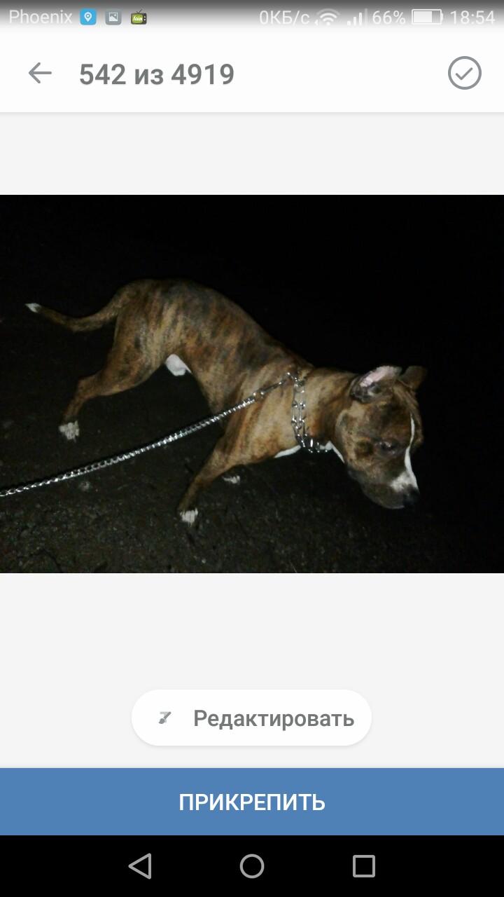 ❗❗❗❗❗пропала собака, по кличке Султан, видевшего его место нахождения сообщать по тел.