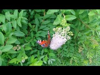 Летающие цветы