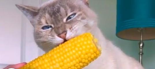 Ман сити реал мадрид cob cat