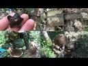 Подъем двух верховых бойцов. Раскопки в Рамушевском коридоре смерти