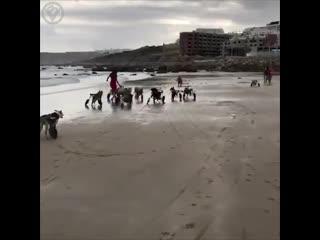 Собаки-инвалиды тоже любят бегать по пляжу