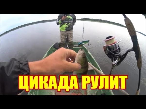 ОДНАЖДЫ НА РЫБАЛКЕ С КЛУБОМ БЕЛУГА predatory fish2019
