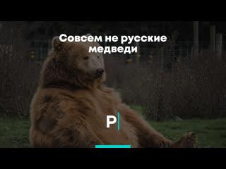 Совсем не русские медведи