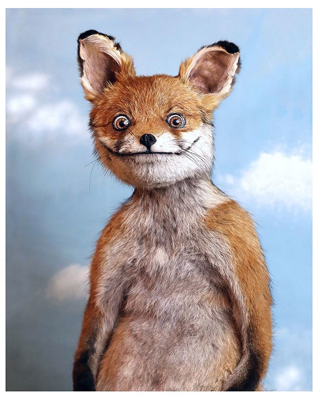 урок трахал смешные картинки с чучелом лисы морскую тематику символ
