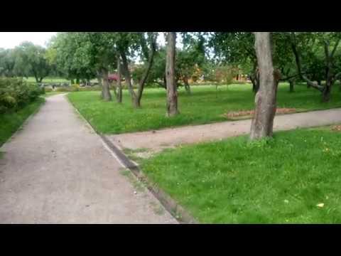 Пернатые веганы) Спасают груши после грушепада в парке Москвы