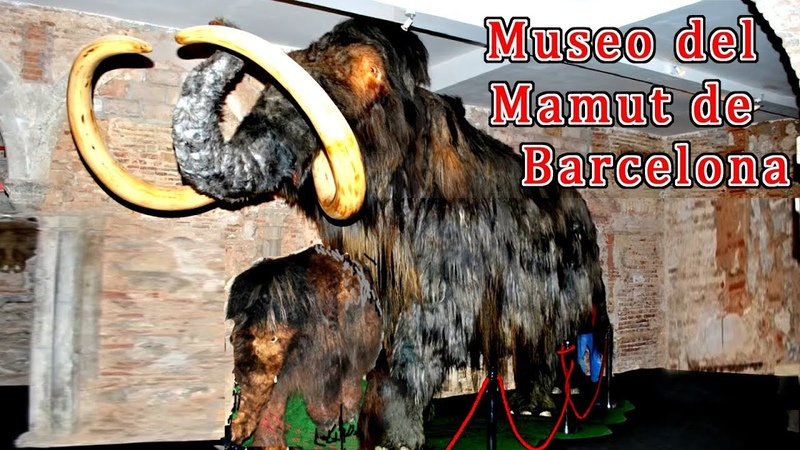 Museo del Mamut de Barcelona del Mamut Lanudo Rinoceronte Lanudo y Bisonte estepario смотреть онлайн без регистрации