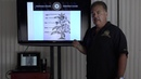 Nick Perdomo Explains the Different Leaves on a Tobacco Plant Volado Seco Viso and Ligero