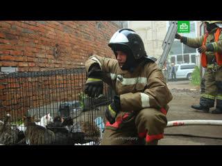 Пожарные спасли всех кошек и собак из горящего приюта