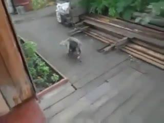 Битый не битого несёт,ну кот и хитрюга)