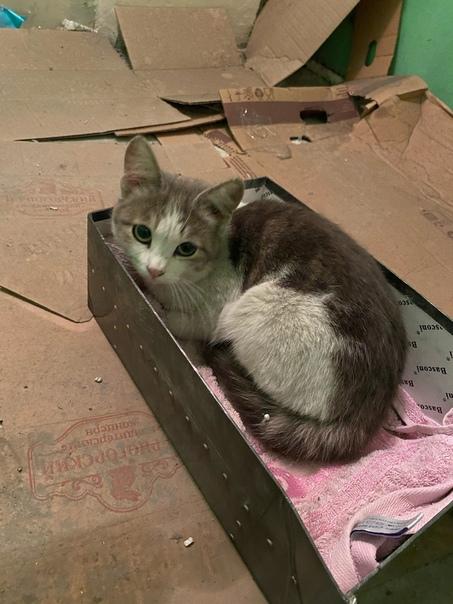 картинки о потере кошки несколько