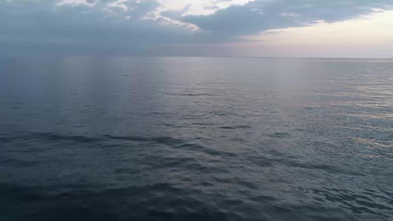 Республика Абхазия 2018 г Дельфин у башни Смецкого Н Н п Агудзера