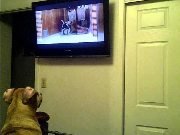 Nala watches Homeward Bound part 3