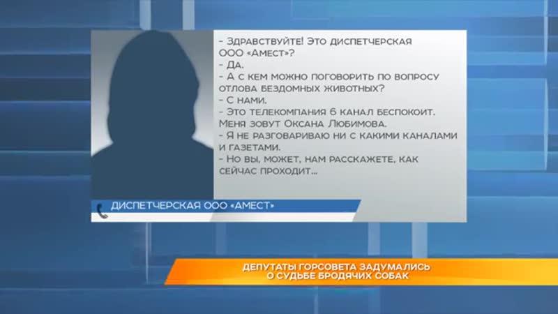 Депутаты горсовета города Владимира задумались о судьбе бродячих собак