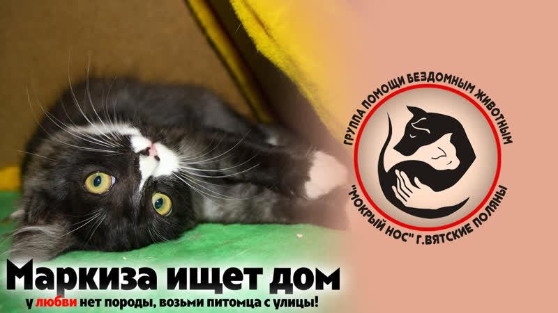 Кошка Маркиза ищет дом