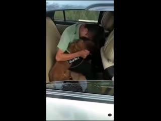 Служебный пес не хочет, чтобы уезжал хозяин