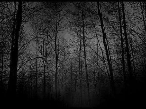 [FREE] gloomy forest — BONES x GHOSTEMANE TYPE BEAT (prod. by angelxfdarkness)