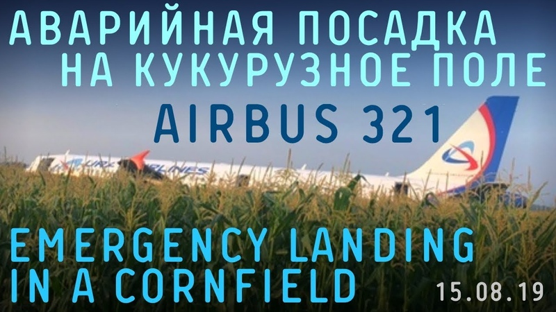 Russian Airbus A321 emergency landing in a cornfield 15 August 2019