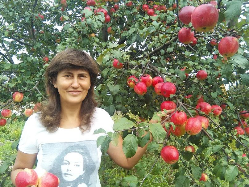 Кейс продажа саженцев и плодовых деревьев., изображение №2