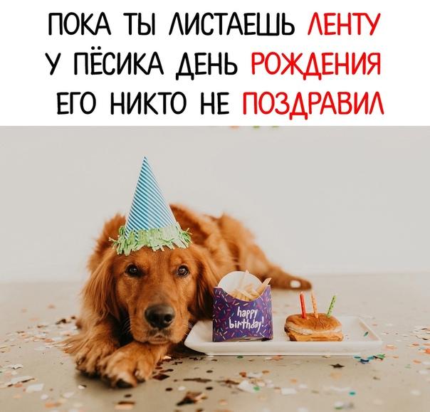 Поздравление с днем рождения собака с тортом