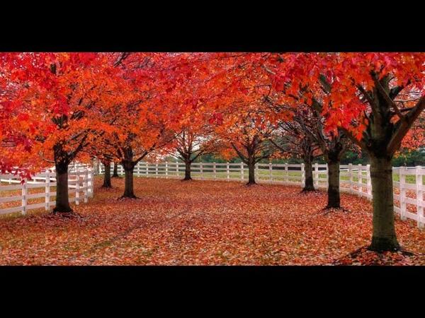 C'est l'automne ( pomme rouge, raisin noir ) - chanson enfantine
