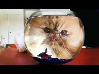 Смешные коты | Подборка за неделю #20 | Котопятница