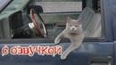 Приколы с котами с ОЗВУЧКОЙ – КОТЫ И МАГИЯ! Самое смешное видео! РЖАКА ДО СЛЁЗ!– PSO