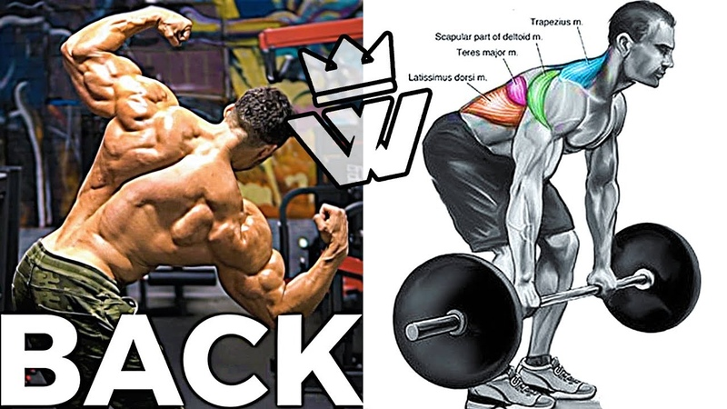 Complete BACK WORKOUT | 16 Effective Exercises
