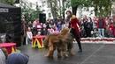 Trained dogs Шоу программа Дрессированные собаки Бриары Cani addestrati