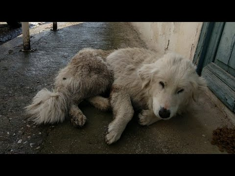 Injured stray dog collapsed on the pavement.. See her today.