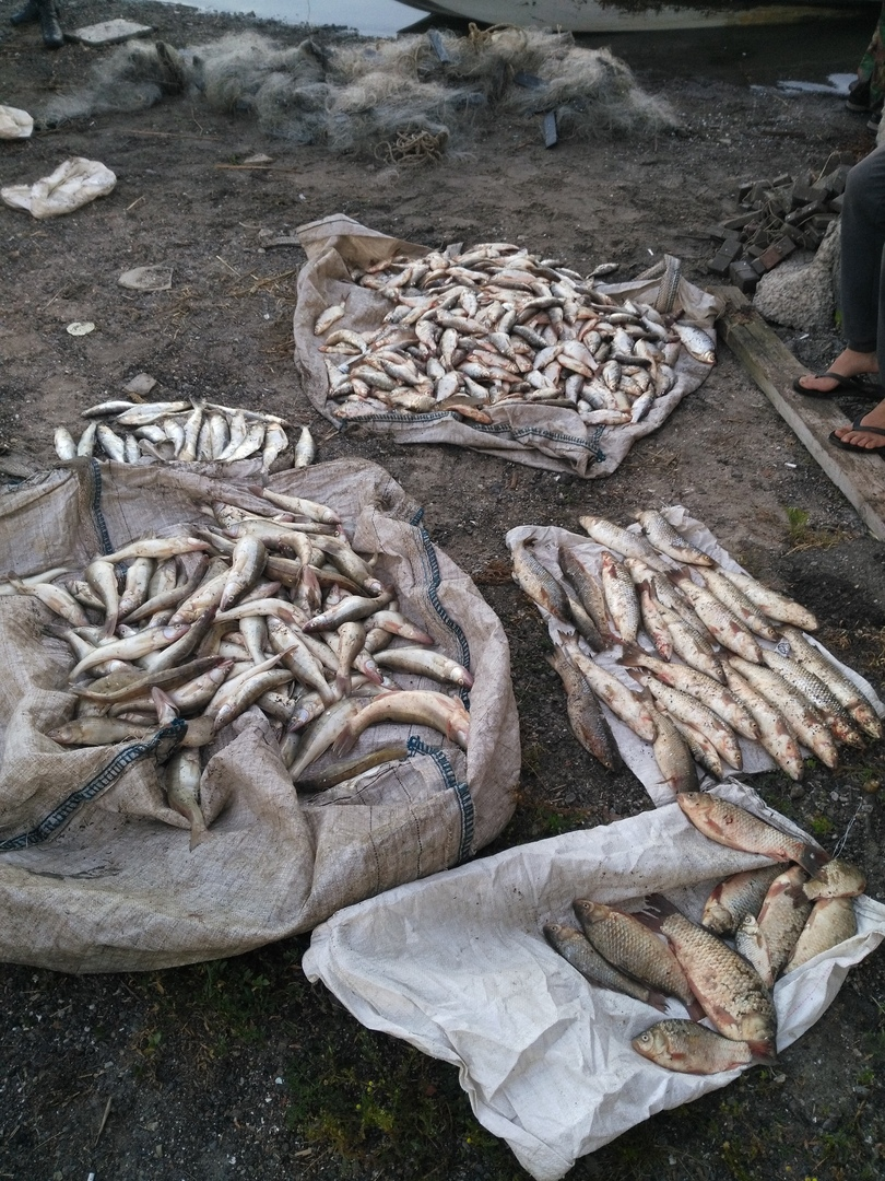 В Таганрогском заливе задержали браконьеров, нанесших ущерб водным биоресурсам более 1 млн.рублей