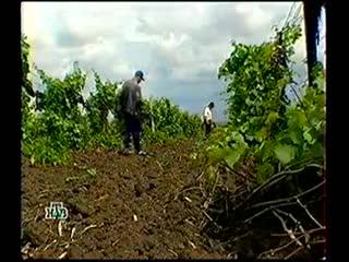 (staroetv.su) Профессия репортёр (НТВ, 25.03.2000) Чёрный археолог