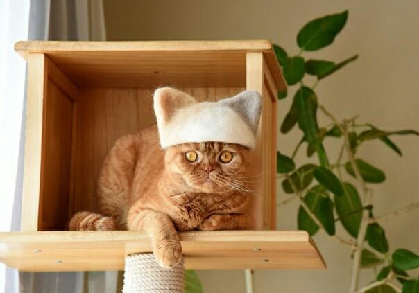 Зачем выбрасывать вычесанную шерсть, если из неё получаются отличные шапки?