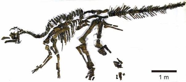 В Японии обнаружен новый вид динозавров