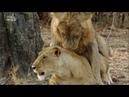 Африканские охотники 3 сезон 2 серия - Гордость и предубеждение