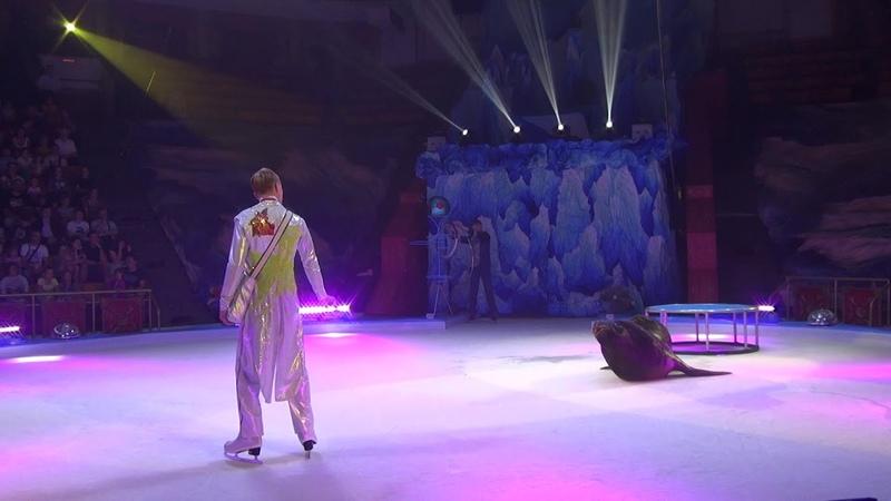 Дрессура сивуча Цирк на льду Программа Айсберг