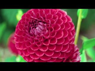 Breathtaking Colors of Nature in 4K  Beautiful Flowers - Sleep Relax Music 4K UHD TV Screensaver