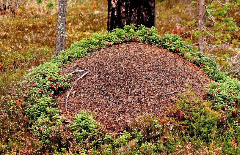 Маленькие наполеоны растительного и животного мира, изображение №5