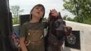 Лишь седой ветеран еще помнит собачью упряжку, в медсанбат утащившую с поля боя когда-то его