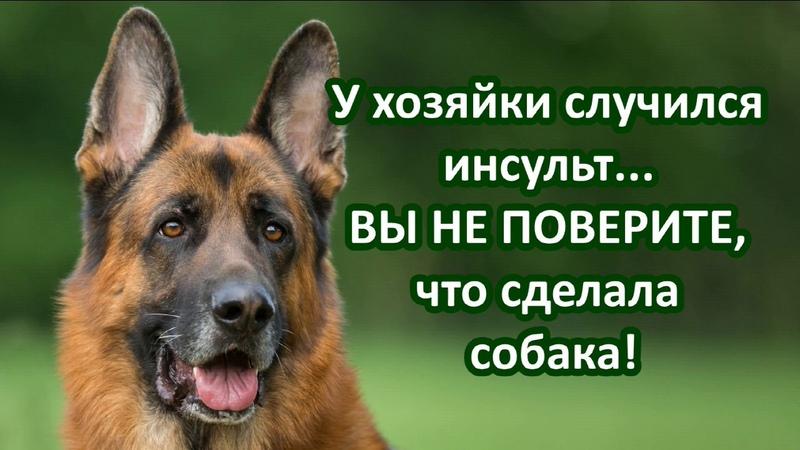 Все псы попадают в рай Куда уходят души животных о Михаил Махов