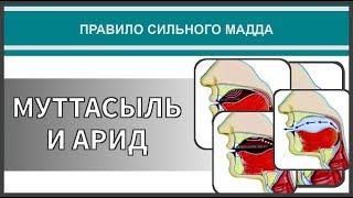 Айман Сувейд 41 Правило сильного мадда МУТТАСЫЛЬ И АРИД с субтитрами на русском