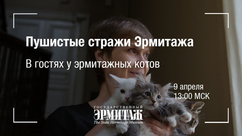 Премьера Пушистые стражи Эрмитажа В гостях у эрмитажных котов