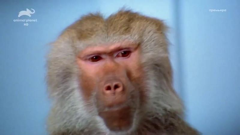 Удивительный мир животных Документальный фильм Animal Planet о дикой природе