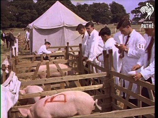 Royal Counties Agricultural Show AKA Agricultural Show (1961)