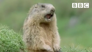 Alan!.. Alan!.. Steve! | Walk on the Wild Side - BBC