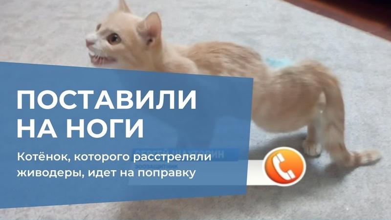 Котёнок, которого расстреляли неизвестные живодеры, идет на поправку