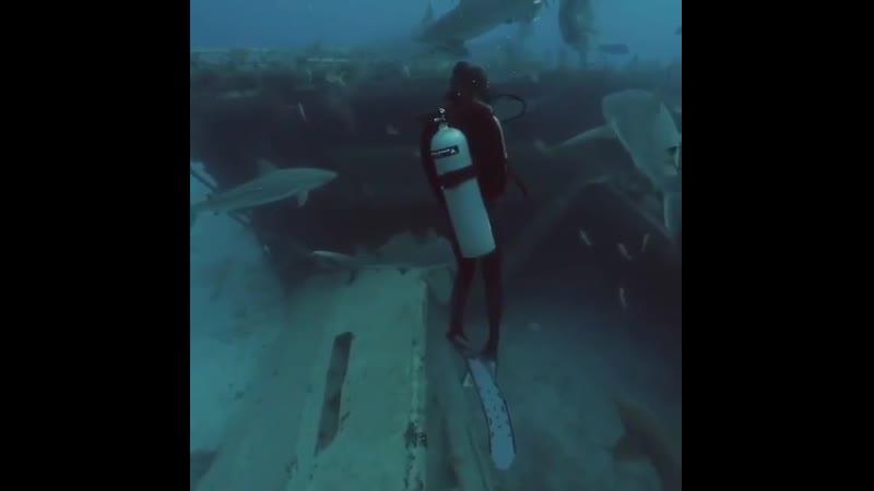 Большая белая акула Королева бала