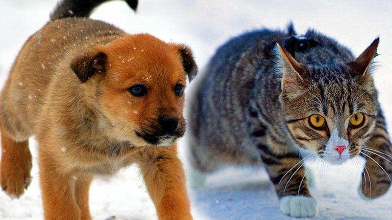 Кот протаптывал дорожку замёрзшему щенку и вёл его к теплу... Трогательная история...