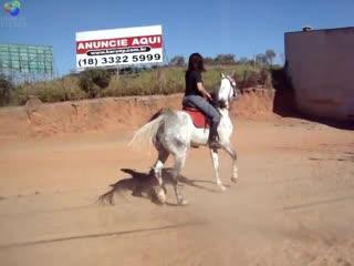 Cavalo_Arabe_recuando_Arabian_Horse.failed-conv