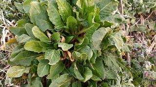 Весенние дикорастущие травы, собираем вместе/ 10 полезных дикоросов:звездчатка,горчица луговая и др,